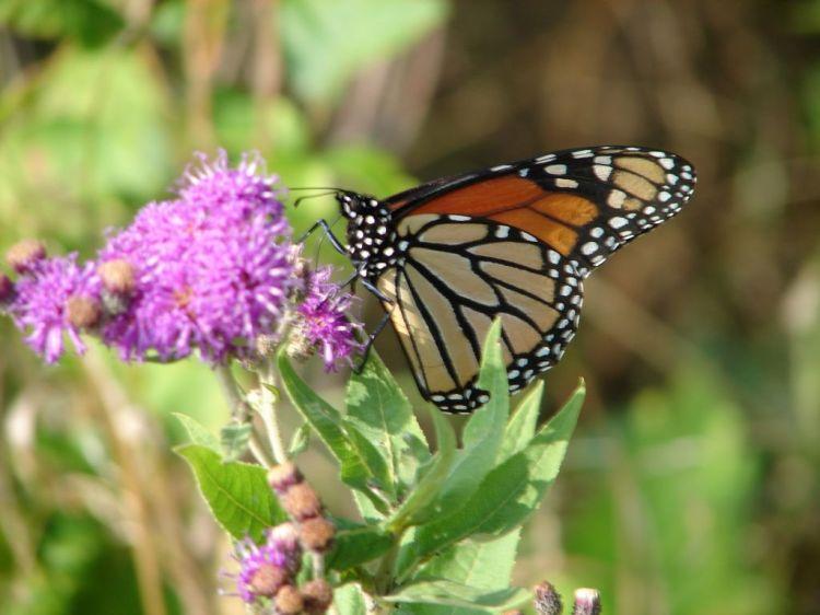 butterfly-1551323