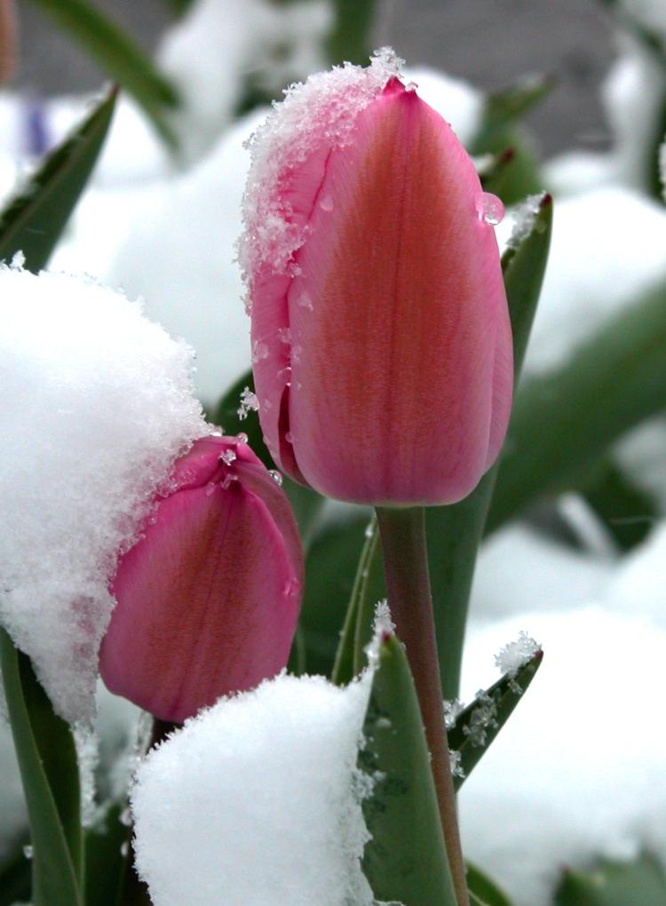 spring-storm-1409025