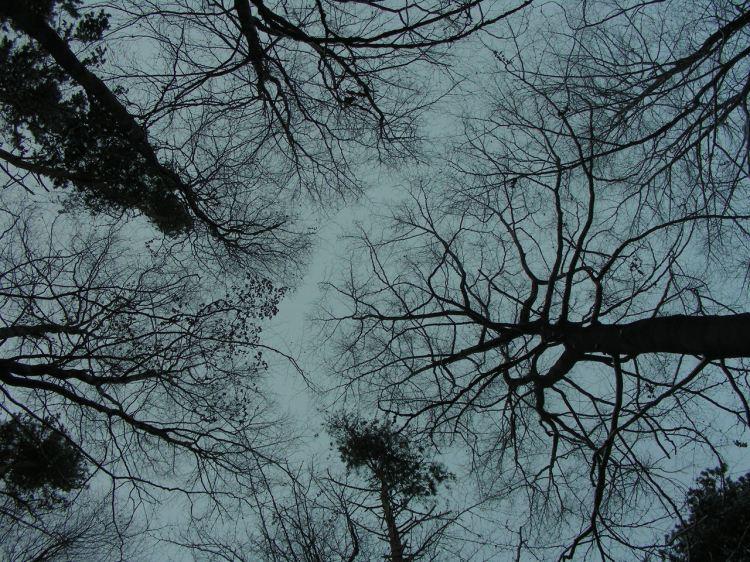trees-1408173-1280x960