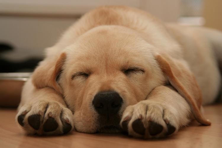 puppy-1371458-1599x1066