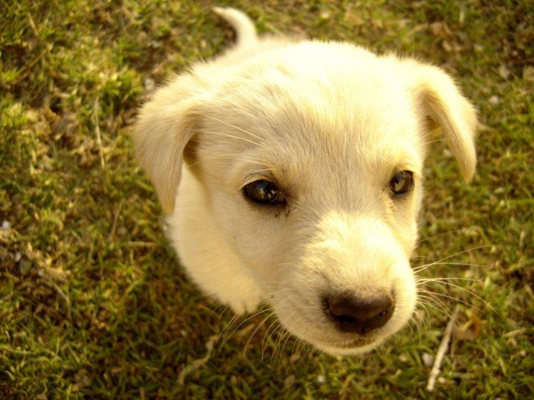puppy-1400778-1600x1200
