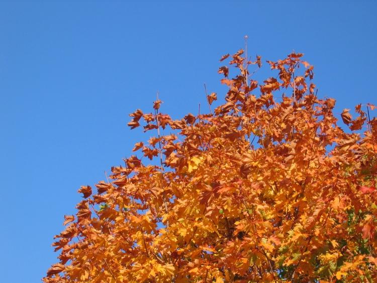 autumn-acer-1399380-1600x1200